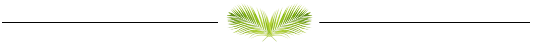 veterinarian and animal hospital in sunrise, fl: palm leaf separator