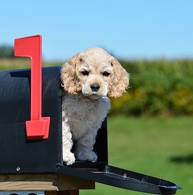 small dog in mailbox: Contact Us in Sunrise